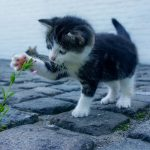 5 dingen om rekening mee te houden als je een kitten opvoedt